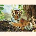 Вышивка тигра