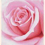 Вышивка розы